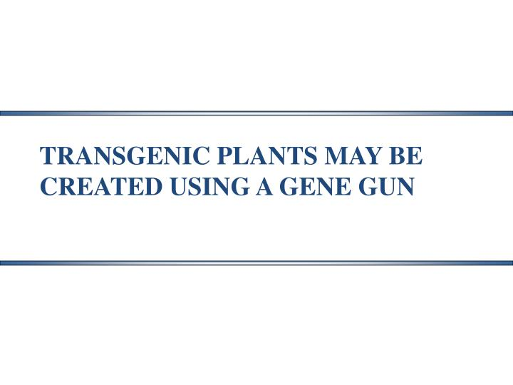 TRANSGENIC PLANTS MAY BE  CREATED USING A GENE GUN