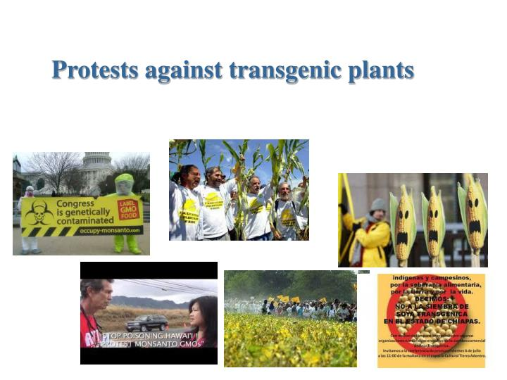 Protests against transgenic plants
