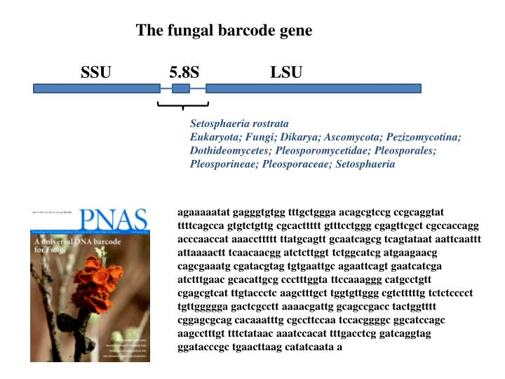 The fungal barcode gene