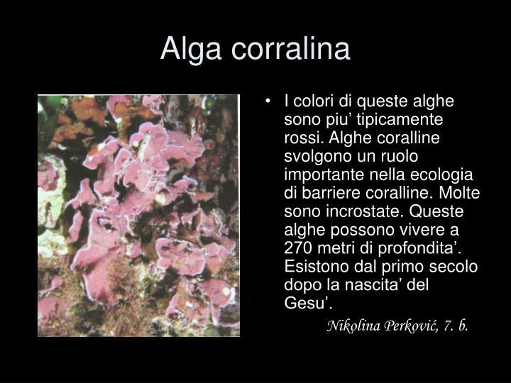 Alga corralina