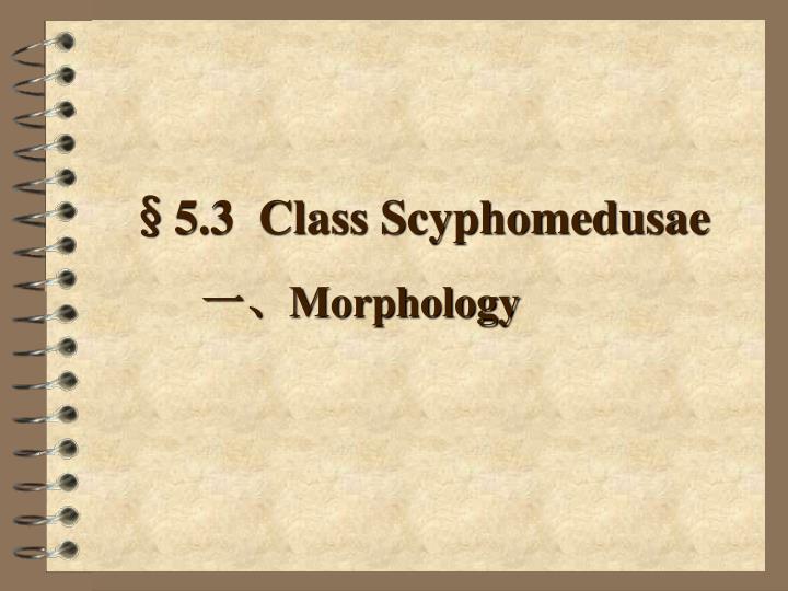 §5.3  Class Scyphomedusae