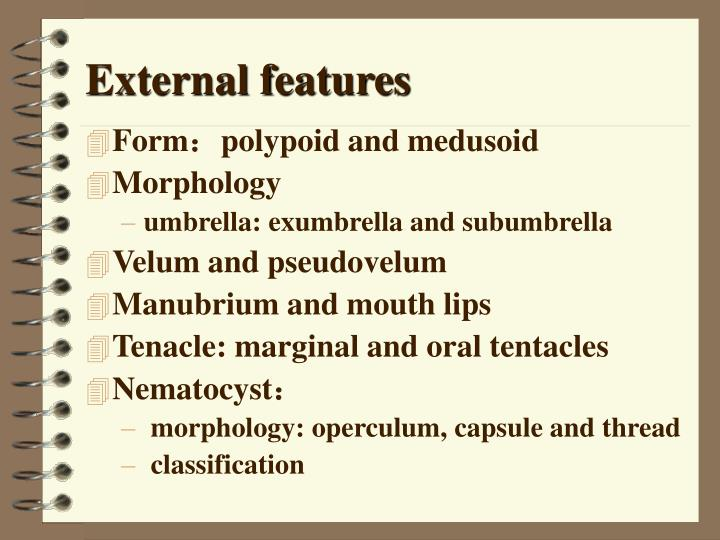 External features