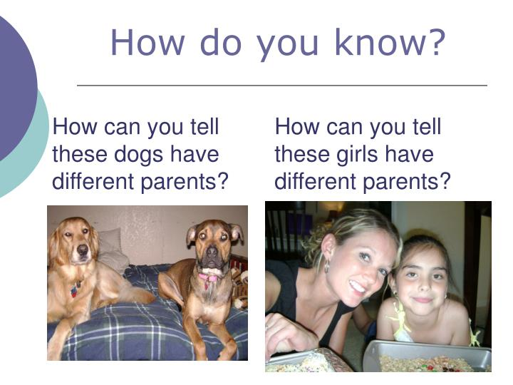 How can you tell these dogs have different parents?