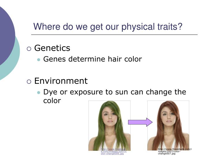 Where do we get our physical traits?