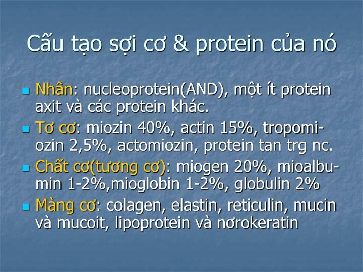 Cấu tạo sợi cơ & protein của nó