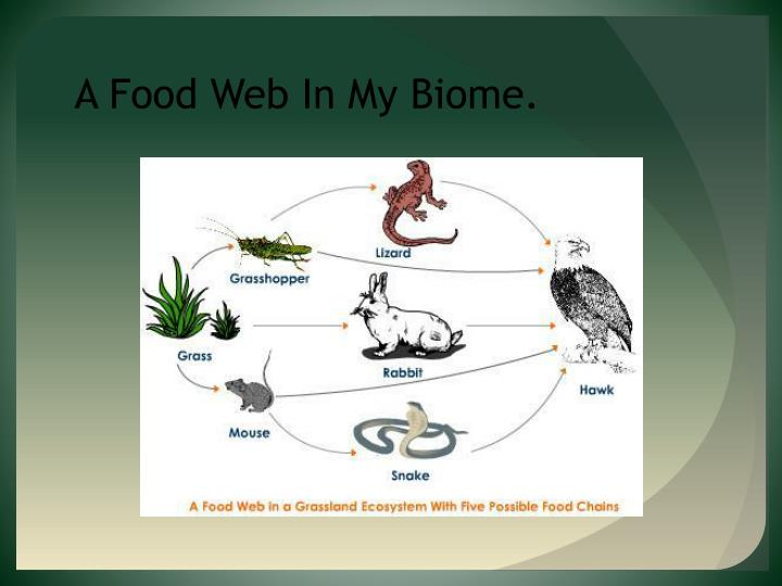 A Food Web In My Biome.