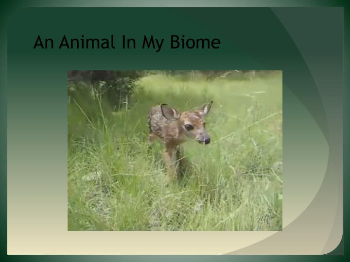 An Animal In My Biome