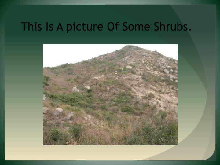 This Is A picture Of Some Shrubs.