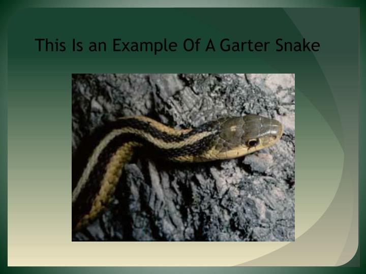 This Is an Example Of A Garter Snake