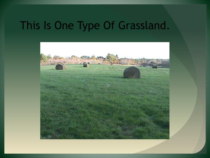 This Is One Type Of Grassland.