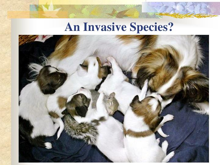 An Invasive Species?