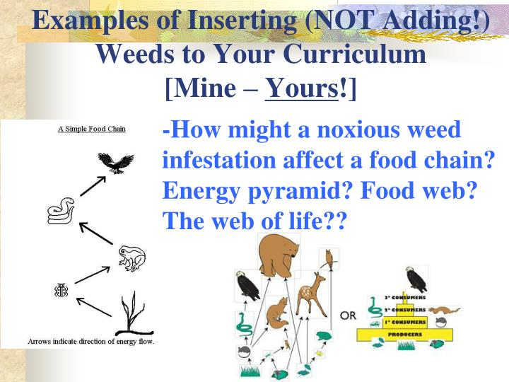 Examples of Inserting (NOT Adding!) Weeds to Your Curriculum