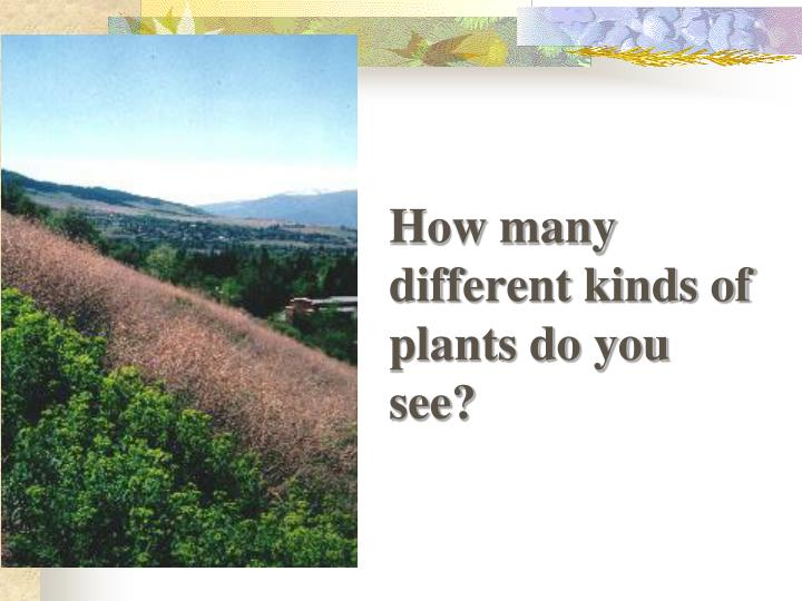 How many different kinds of plants do you see?