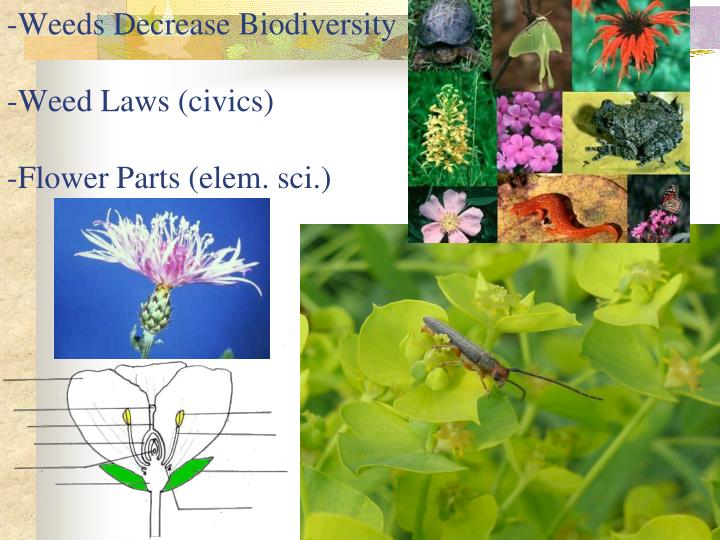 -Weeds Decrease Biodiversity