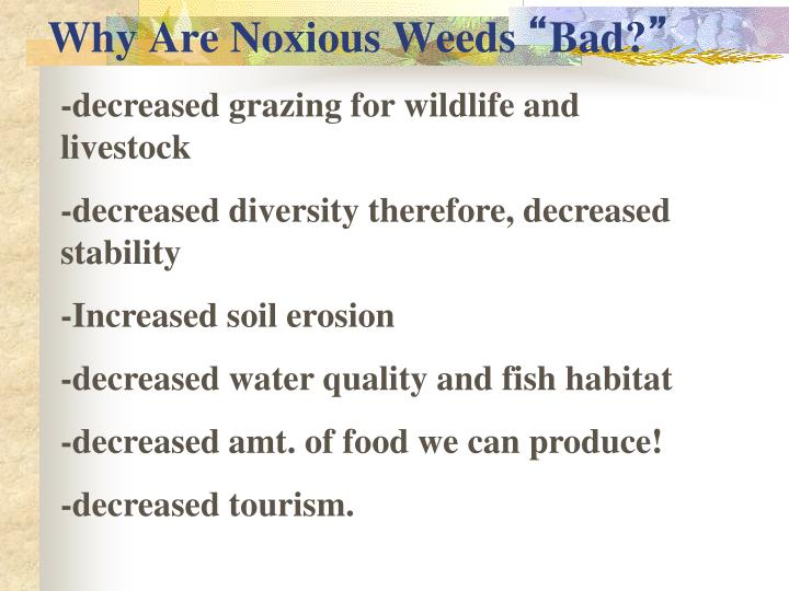 Why Are Noxious Weeds
