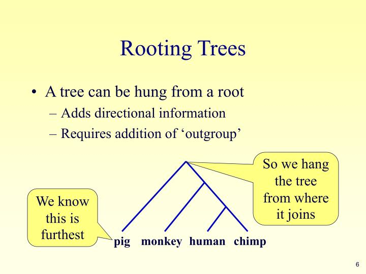 Rooting Trees