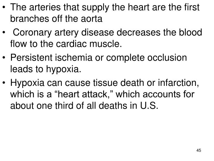 The arteries that supply the heart are the first branches off the aorta