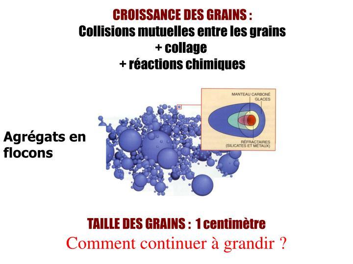 CROISSANCE DES GRAINS: