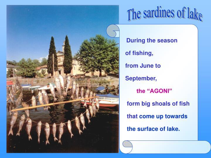 The sardines of lake