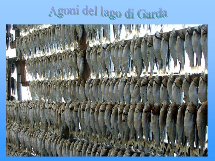 Agoni del lago di Garda