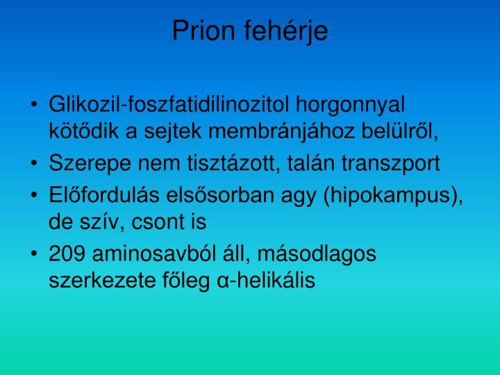 Prion fehérje