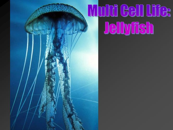 Multi Cell Life: