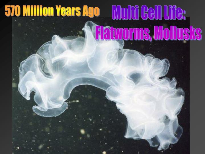 570 Million Years Ago