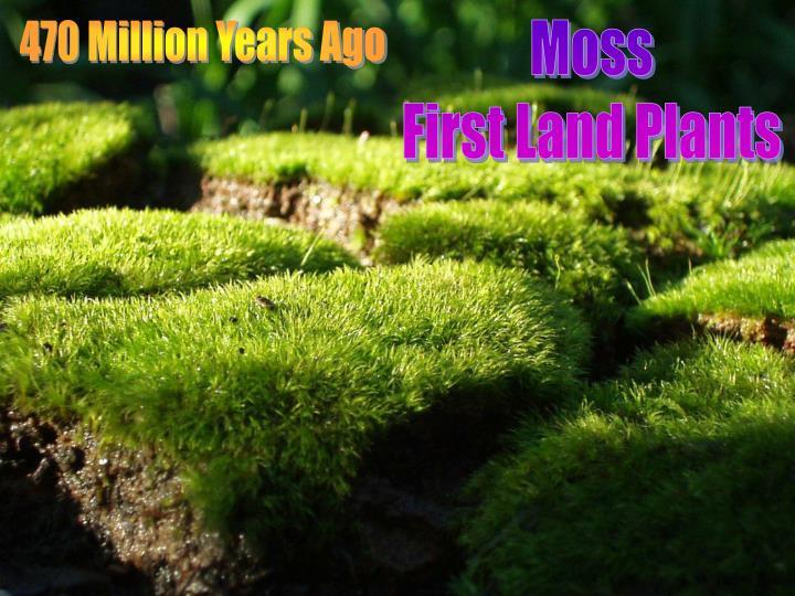 470 Million Years Ago