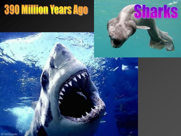 390 Million Years Ago