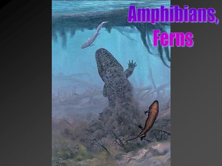 Amphibians,
