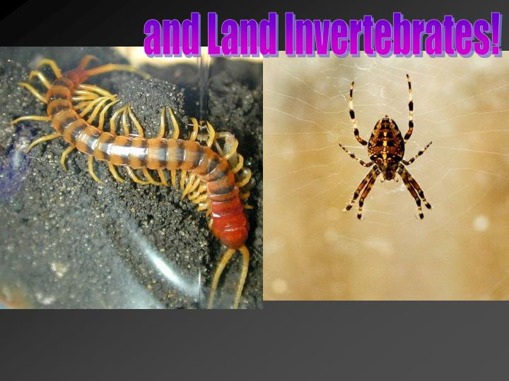and Land Invertebrates!