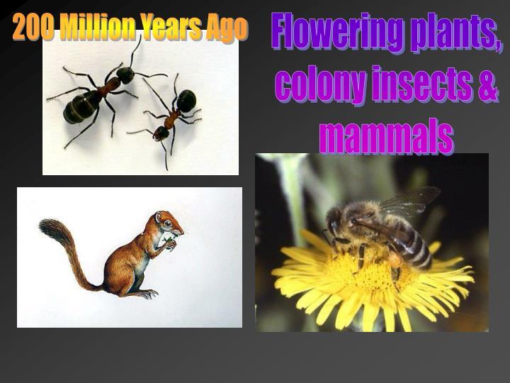 200 Million Years Ago