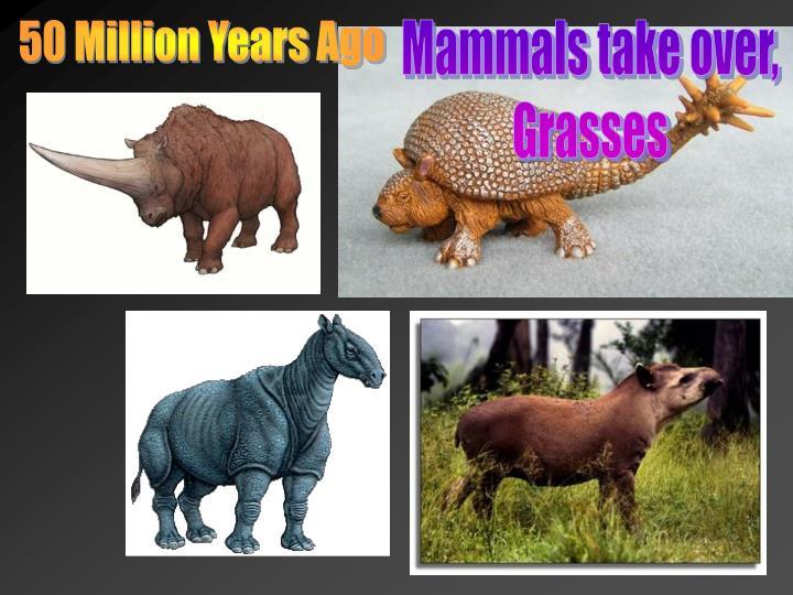 50 Million Years Ago