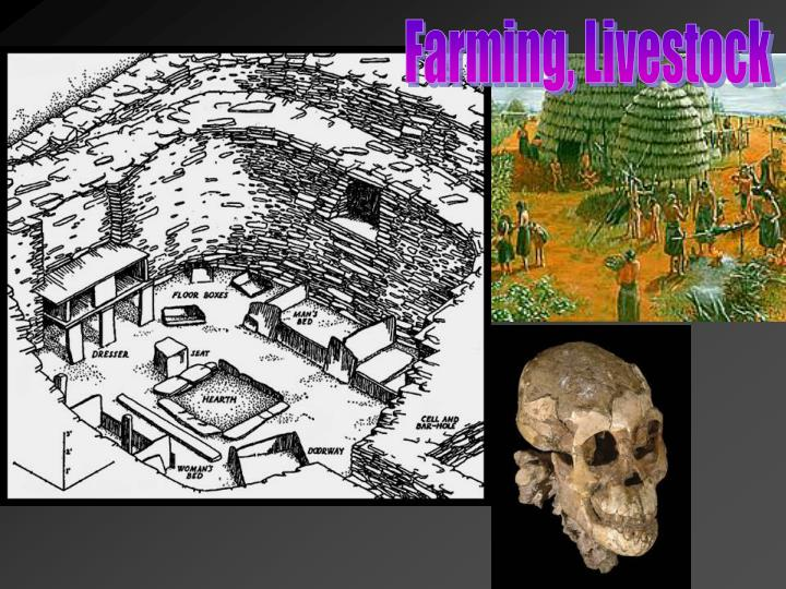 Farming, Livestock