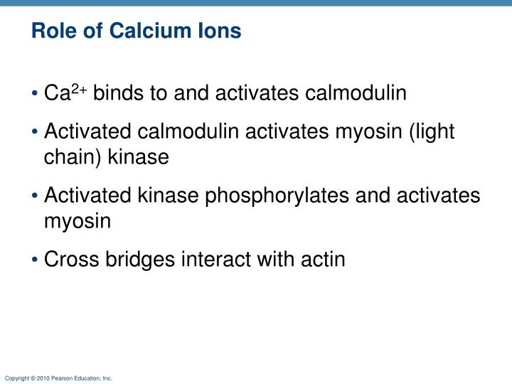 Role of Calcium Ions