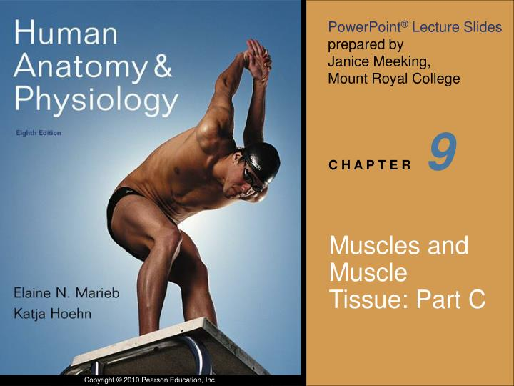 Muscles and muscle tissue part c