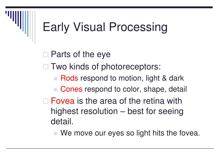Early Visual Processing