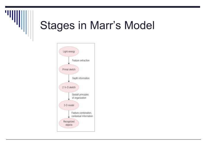 Stages in Marr's Model