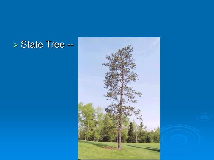 State Tree --