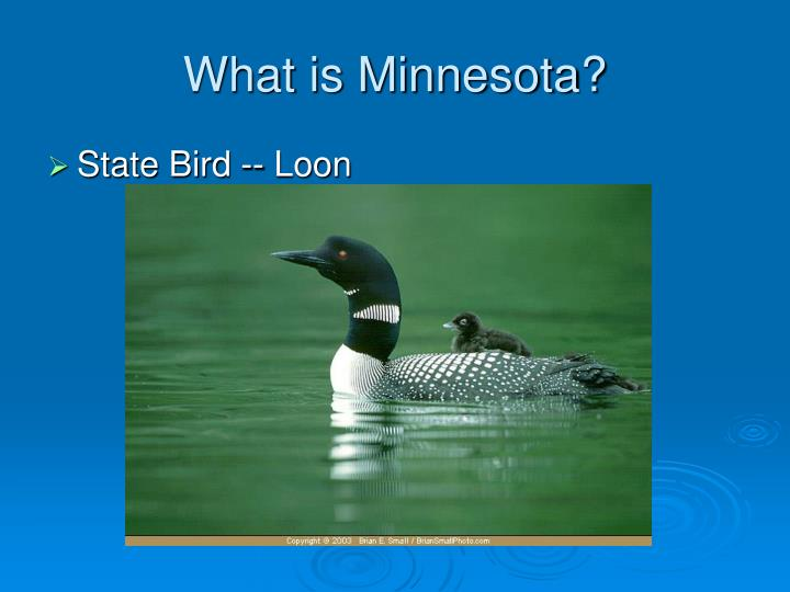 What is minnesota