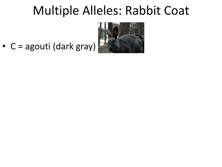 Multiple Alleles: Rabbit Coat