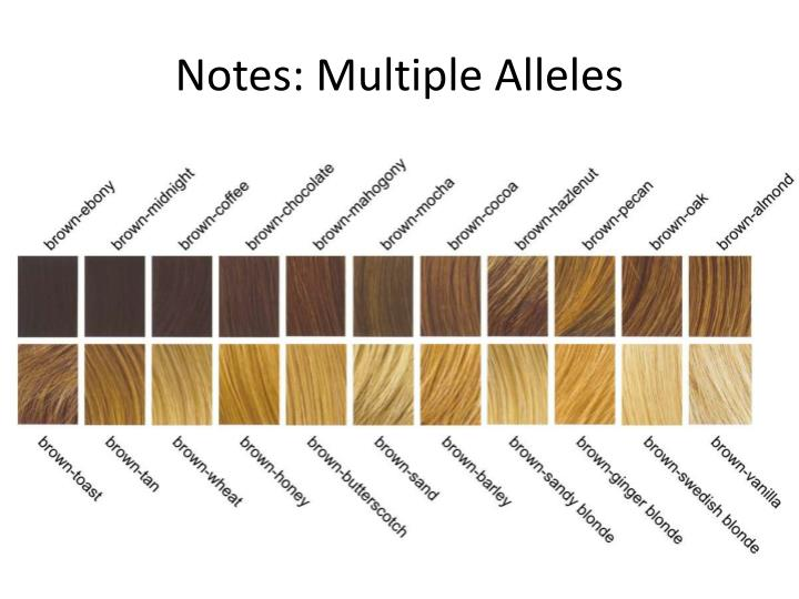 Notes multiple alleles