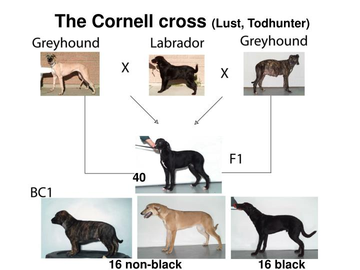 The Cornell cross