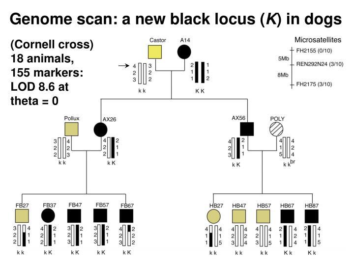 Genome scan: a new black locus (