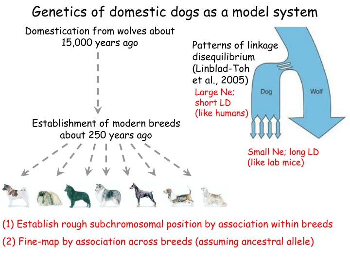 Genetics of domestic dogs as a model system