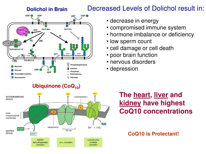 Decreased Levels of Dolichol result in:
