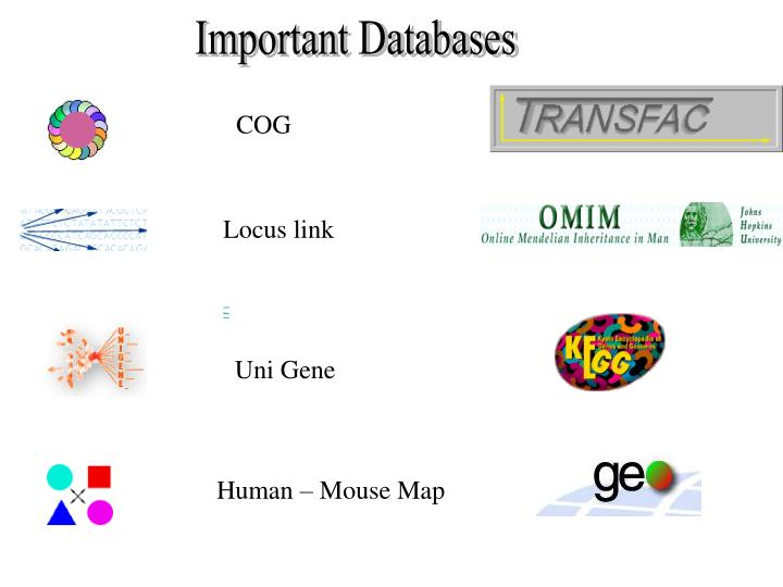 Important Databases