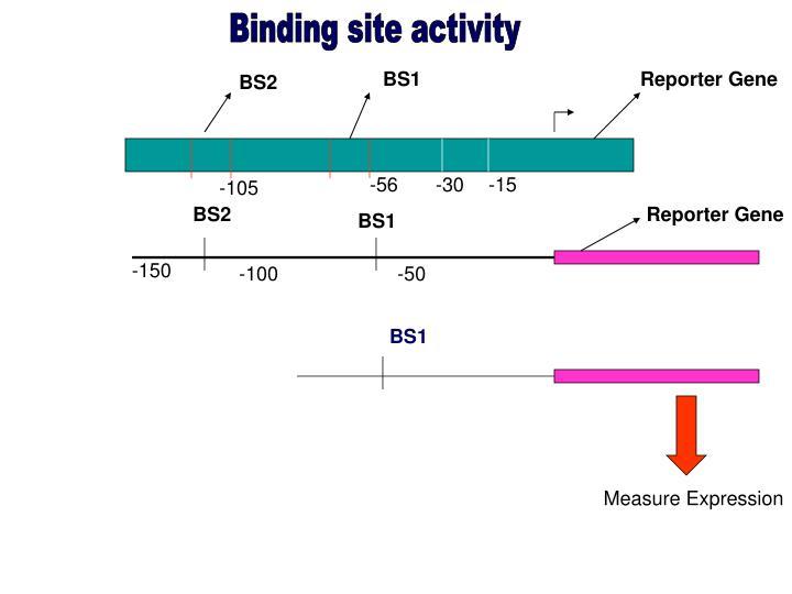 Binding site activity