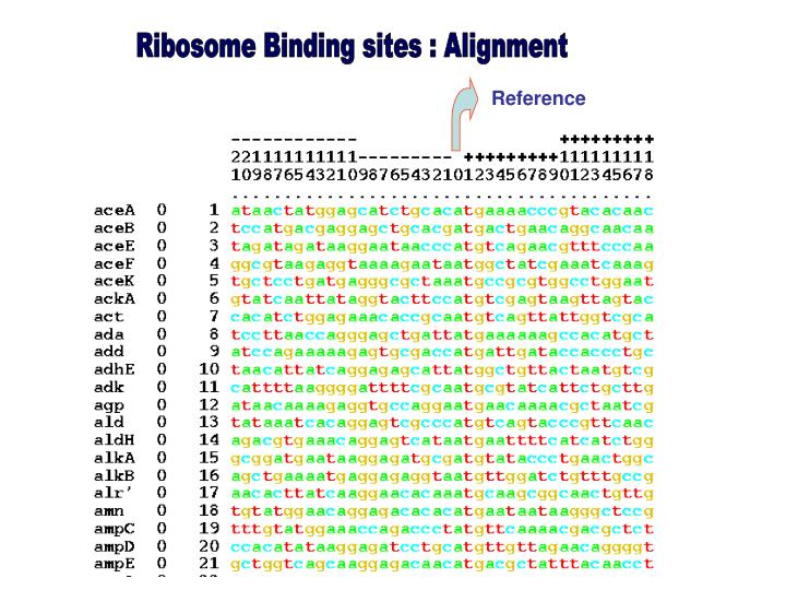Ribosome Binding sites : Alignment