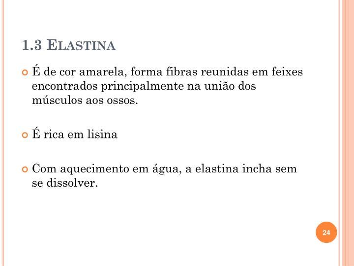 1.3 Elastina